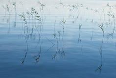 Blauwe wateren Royalty-vrije Stock Foto's