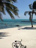 Blauwe Watergrill, strandmening San Pedro, Amber Caye Belize stock foto's