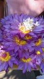Blauwe waterlelie stock foto