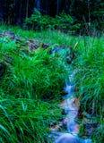 Blauwe waterval in bos Royalty-vrije Stock Foto's