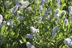 Blauwe wilde bloemen die in een wind blazen stock video