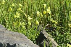Blauwe wilde bloemen die in een wind blazen stock videobeelden
