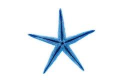 Blauwe zeester stock afbeelding