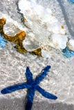Blauwe zeester en parelshell in het duidelijke water Royalty-vrije Stock Foto's