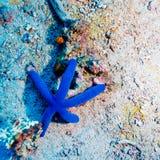 Blauwe Zeester op Zandige Bodem van Ertsader Stock Afbeeldingen