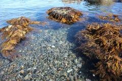 Blauwe zeewater, stenen en rotsen, mariene flora royalty-vrije stock foto