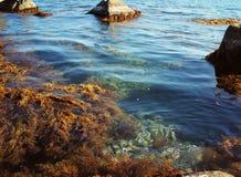 Blauwe zeewater, stenen en rotsen, mariene flora stock foto's