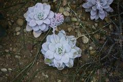 Blauwgroene bloem in de tuin Royalty-vrije Stock Afbeeldingen