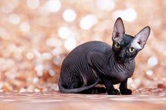 Blax-Sphinx im Gold Lizenzfreies Stockfoto