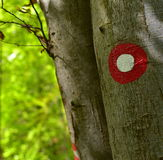 Blaze, red and white sign on the beech tree Stock Photography