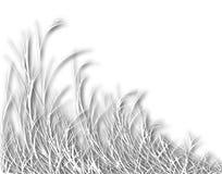 Blazend gras Stock Afbeelding