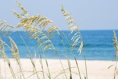 Blazende seagrass Royalty-vrije Stock Afbeeldingen