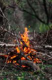 Blazing branches and firewood in the evening Stock Images