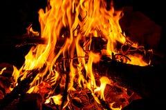 Blazing Campfire Stock Image