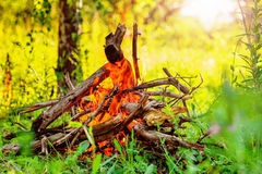 Blazing campfire coals Royalty Free Stock Image