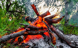 Blazing campfire coals Stock Photography