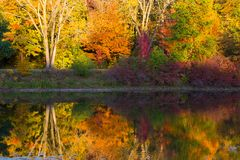 Brilliant Fall Trees Reflected in Water in Wright Woods Stock Photography