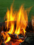 Blazing fire. Fire in a fire pit royalty free stock photo