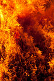 Blazing forest fire. Bright, hot flames from a blazing forest fire royalty free stock image