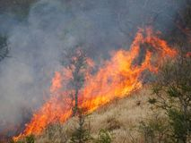 Blazing forest fire. On slope royalty free stock photography