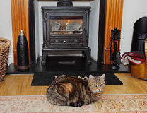 Blazing stove with Tabby Cat on a rug Royalty Free Stock Images
