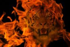 Blazzing tiger över svart bakgrund Royaltyfria Foton