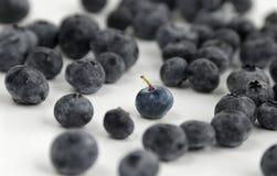 blåbär många Royaltyfria Bilder