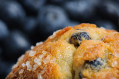 blåbärmuffin Fotografering för Bildbyråer