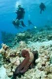 bläckfiskred Royaltyfri Fotografi