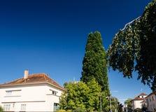 Ble nieba budynek mieszkaniowy i duży drzewo w lecie Obraz Royalty Free