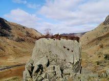 Blea-Felsen in Langstrath-Tal Stockfotos