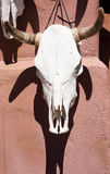 Bleached Cattle Skull and Painted Ceramic Sun, Santa Fe, New Mexico Royalty Free Stock Photo