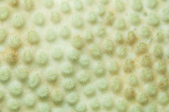 Bleached coral background. Abstract background of bleached or whitened coral reef royalty free stock photos