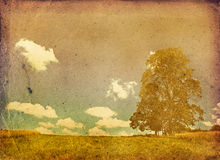 Bleached image of a tree Stock Images