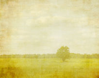Bleached image of a tree Royalty Free Stock Images