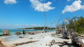 Bleached Trees Beach 01 Stock Photo