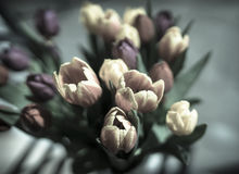 Bleached tulips in May. Tulips in a vase taken in Spring royalty free stock image
