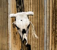 Bleached White Cow Skull on a Post. Bleached White Cow Skull on a Wooden Post Royalty Free Stock Photography