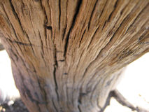 Bleached wood grain. Wood grain on dead tree at top of mountain royalty free stock image