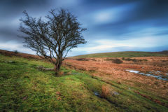 Bleak Bodmin Moor Royalty Free Stock Photography
