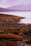 Bleak coastline. Cloudy shore with rusty looking ground by the water Royalty Free Stock Photo
