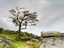 Bleak Exmoor moorland background Royalty Free Stock Images