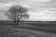 Bleak horizon. Late October fields have been readied as winter beckons royalty free stock images