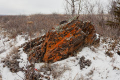 Bleak winter arctic steppe orange lichens rock Royalty Free Stock Photo