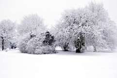 Bleak Winter Snow Scene. Trees in winter covered in heavy snow. Sharp focus, natural light. Ample space for copy if needed royalty free stock photography