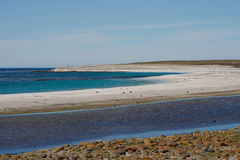 Bleaker Island - Falkland Islands Royalty Free Stock Photos