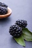 Bleckberry på stenbräde Arkivbild