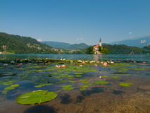Bled Island and Lake with water lilies Royalty Free Stock Image