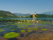 Bled Island and Lake with water lilies Royalty Free Stock Photos