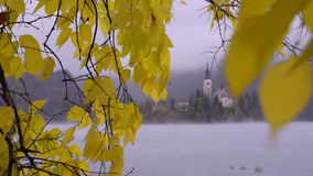 Bled lake. Autumn tree. Island Church. Fog. Island in Lake Bled, Slovenia. Autumn tree. Island Church. Autumn. First snow. Fog. Ducks swimming on water stock footage